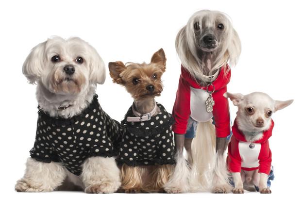 Descubre las mejores opciones en ropa para perros